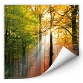 Wallprint W - Goldener Herbst