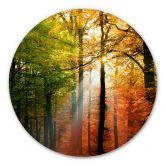 Alu-Dibond - Goldener Herbst - Rund