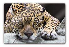 Glasschilderijen - Glasschilderijen Jaguar