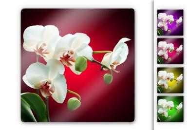 glasbilder mit orchideen wall. Black Bedroom Furniture Sets. Home Design Ideas