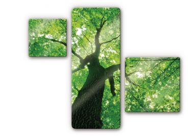 glasbilder mit naturbildern wald k ste felder wall. Black Bedroom Furniture Sets. Home Design Ideas