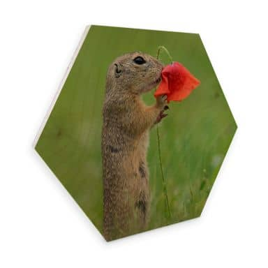 Hexagon Birch wood Dick van Duijn - Squirrel with poppy