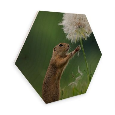 Hexagon Birch wood Dick van Duijn - Squirrel with dandelion