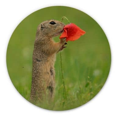 Wood picture Dick van Duijn - Squirrel with poppy - round