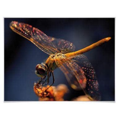 Poster Dufour - Libelle auf Tuchfühlung