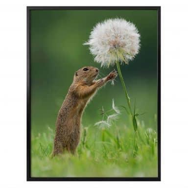 Poster Dick van Duijn - Squirrel with dandelion