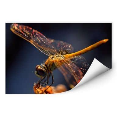 Wallprint Dufour - Libelle auf Tuchfühlung