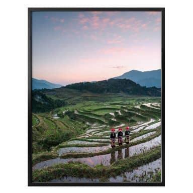 Poster Colombo - Reisterrassen in Vietnam