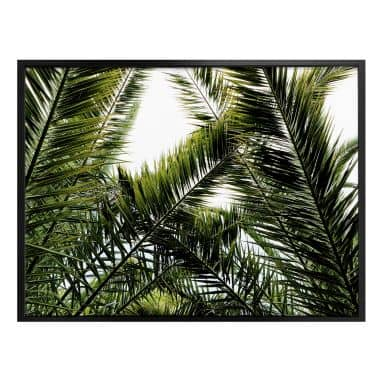 Poster Palm Leaves