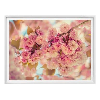 Poster Delgado - Kirschblüten