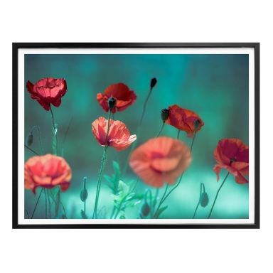 Poster Delgado - Watercolor Poppies