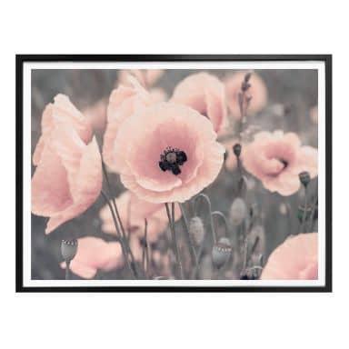 Poster Delgado - Coquelicot rose