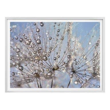 Poster Delgado - Wassertropfen in der Pusteblume