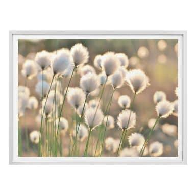 Poster Delgado - Flower Magic