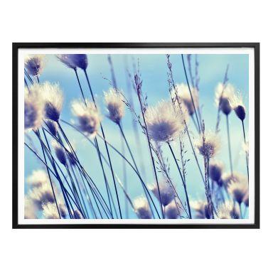 Poster Delgado - Windy Grass