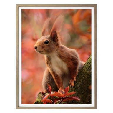 Poster - Squirrel 01