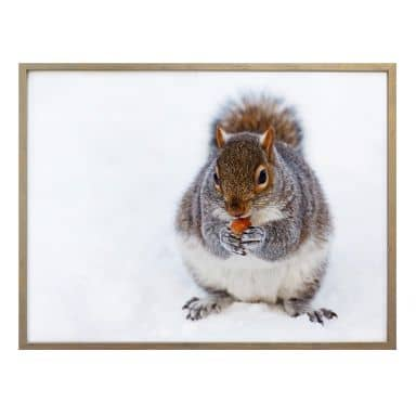 Poster - Squirrel 04