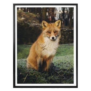 Poster Fox 01