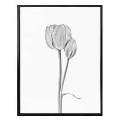 Poster Grønkjær - Tulpen