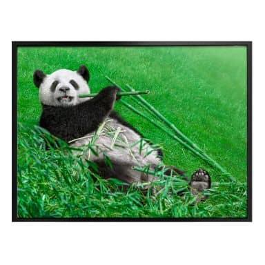 Poster Ben Heine - Happy Panda