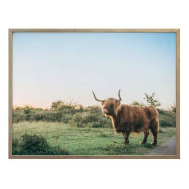 Poster Highland Cow 01