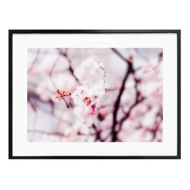 Poster Cherry Blossom 02