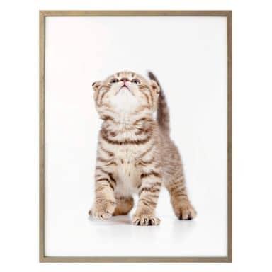 Poster Kätzchen neugierig