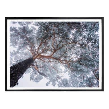 Poster Krivec - Baum im Winter