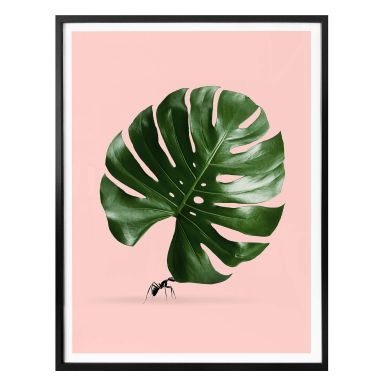 Poster Loose - Monstera Ant