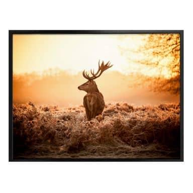 Poster majestic deer
