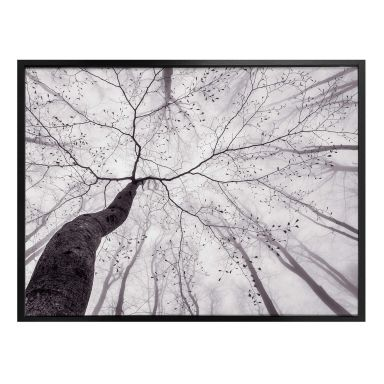 Poster Pavlasek - Vers la cime des arbres