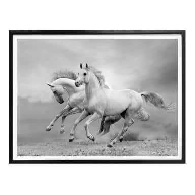 Poster Horses galloping