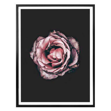 Premiumposter Pink Flower Dream 02
