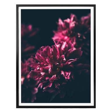 Poster Pink Flower Dream 01