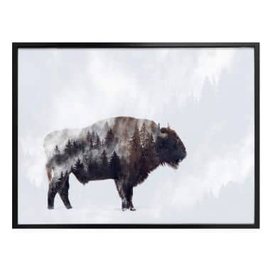 Poster Beáta - the Bison