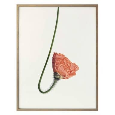 Poster Red Flower 02