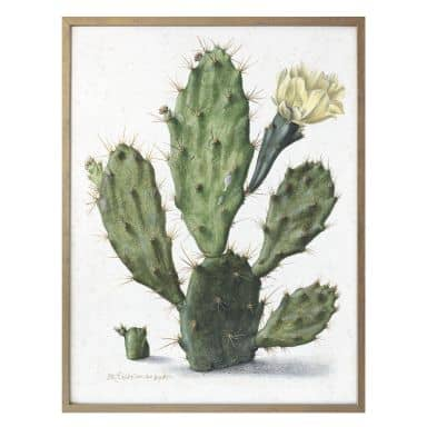 Poster Saftleven - Cactus