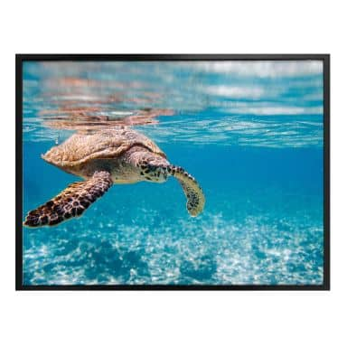 Poster traveling turtle