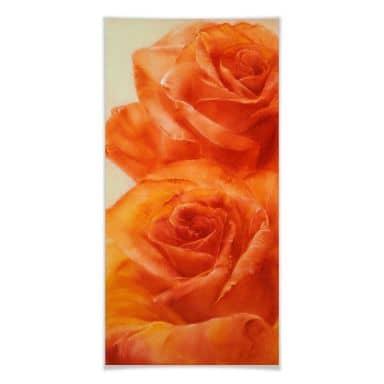 Poster Schmucker - Roses