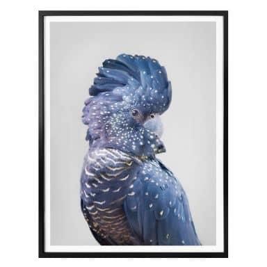 Poster Sisi & Seb - Blue Cockatoo