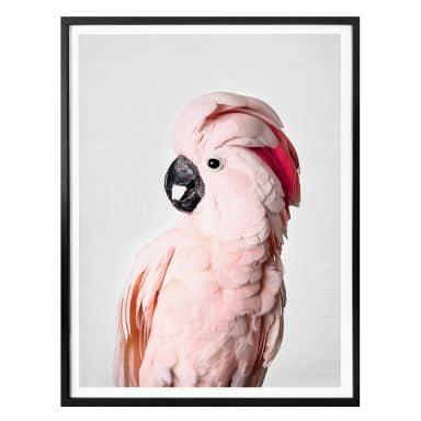 Poster Sisi & Seb - Pink Cockatoo