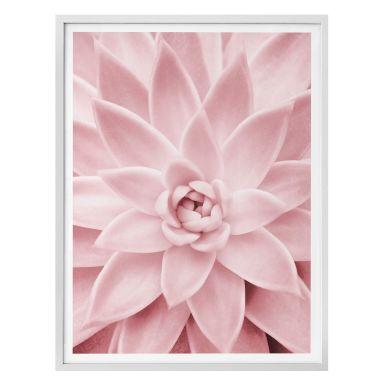 Poster Sisi & Seb - Pink Succulents