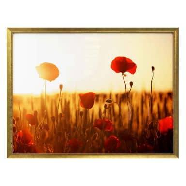 Poster Sonnenflut im Mohnfeld