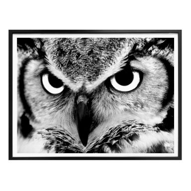Poster Proud Owl