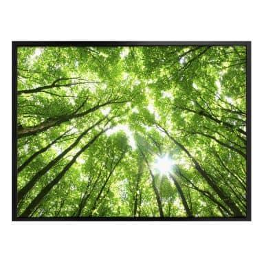 Poster Baumkronen im Wald