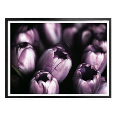 Poster Tulips