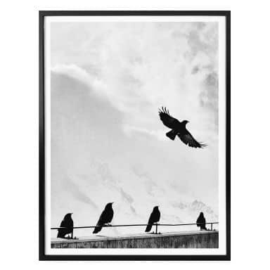 Poster Free as a Bird