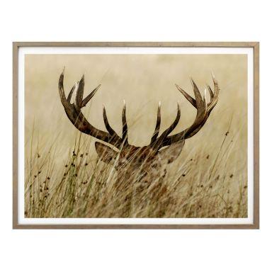 PosterWatchful deer