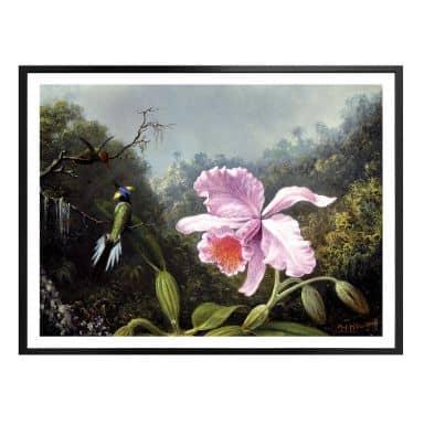 Poster Heade - Stillleben mit Orchidee und Kolibris