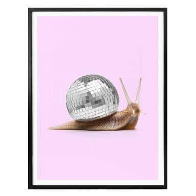 Poster Fuentes - Disco Schnecke